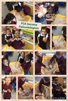 Primary 2A become Paleontologists!!!